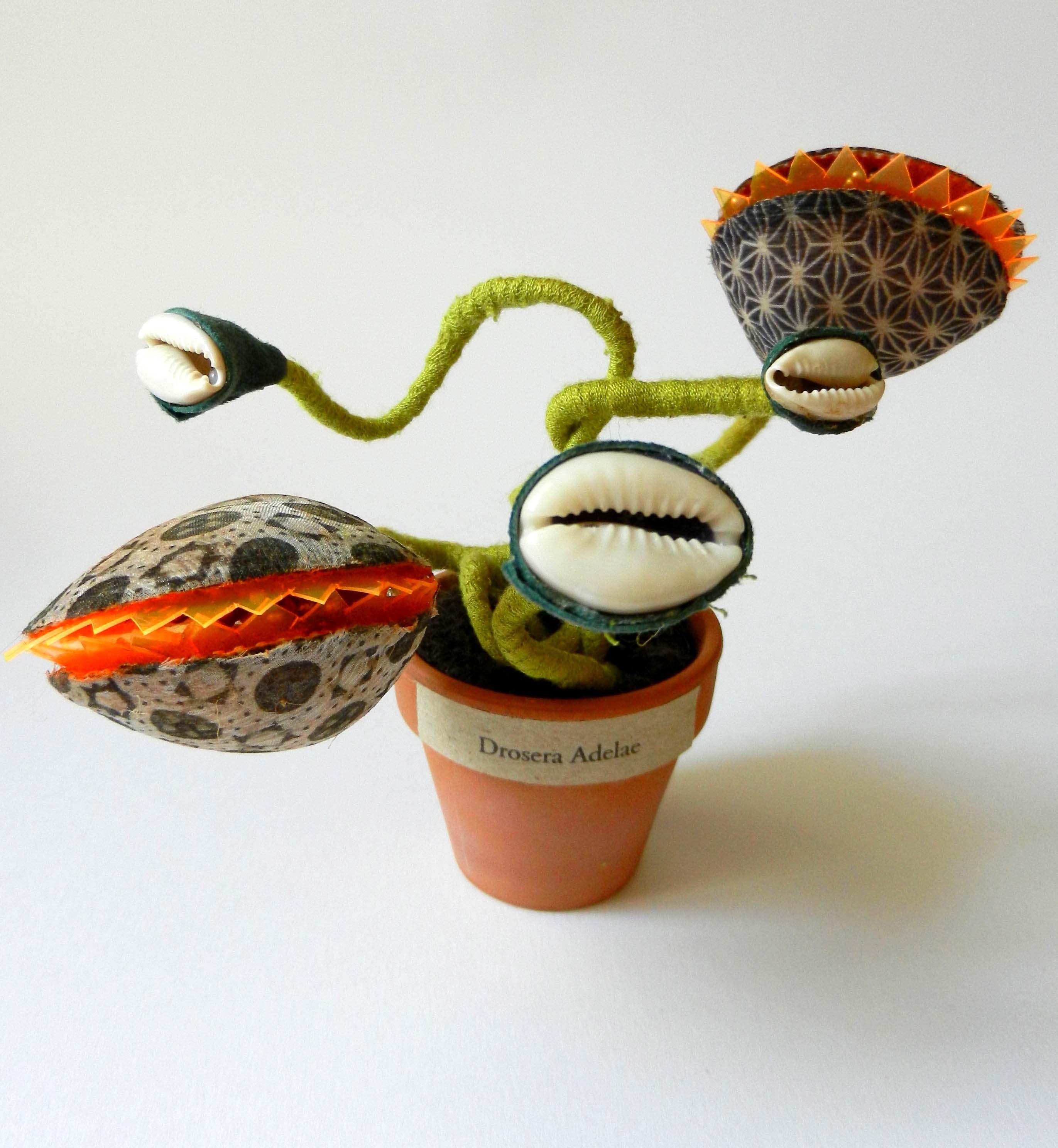 top plantouzes